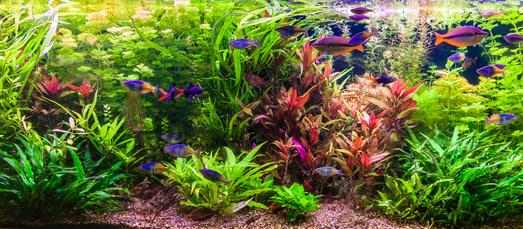 Comment bien entretenir son aquarium